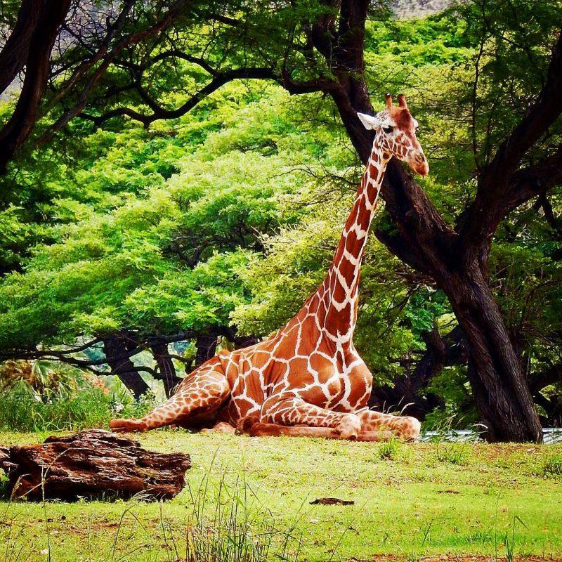 Honolulu Zoo Hawaii on a Map