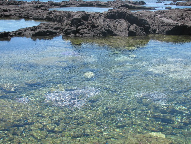Hawaiian islands tide pools pictures to pin on pinterest for Hawaii tides for fishing
