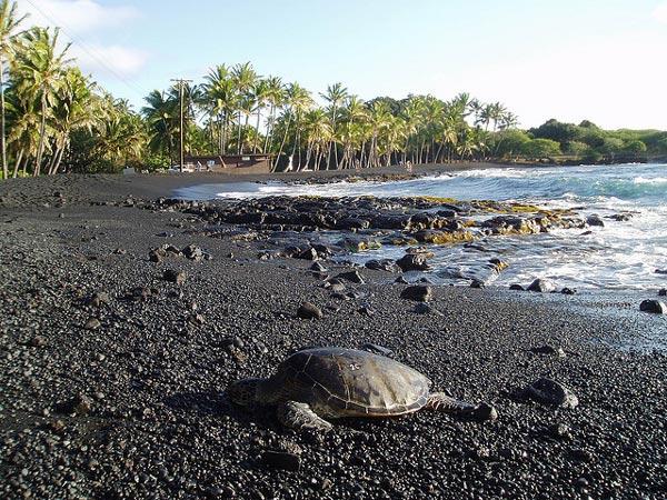 Punaluu Black Sand Beach County Park